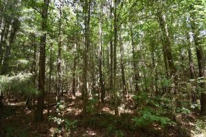 King George Rd. Timber and Homesite in Livingston in Livingston, LA (9 of 31)