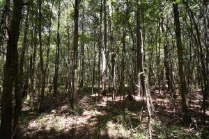 King George Rd. Timber and Homesite in Livingston in Livingston, LA (20 of 31)