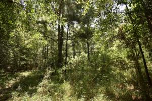 King George Rd. Timber and Homesite in Livingston in Livingston, LA (31 of 31)