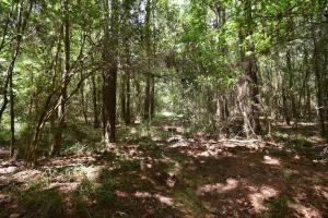 King George Rd. Timber and Homesite in Livingston in Livingston, LA (10 of 31)