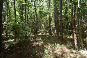 King George Rd. Timber and Homesite in Livingston in Livingston, LA (17 of 31)