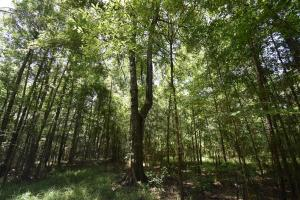 King George Rd. Timber and Homesite in Livingston in Livingston, LA (6 of 31)