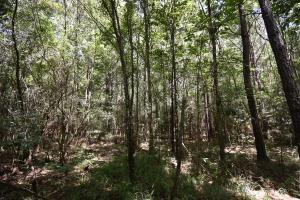 King George Rd. Timber and Homesite in Livingston in Livingston, LA (12 of 31)