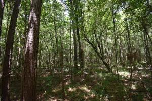 King George Rd. Timber and Homesite in Livingston in Livingston, LA (18 of 31)