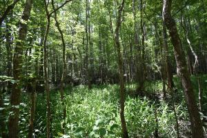 King George Rd. Timber and Homesite in Livingston in Livingston, LA (29 of 31)