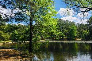 Winnsboro Homesite with Pond and Timber