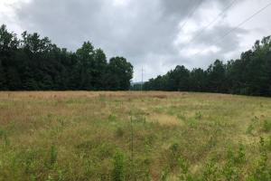 76 Acres Union Road Somerville Alabama in Morgan, AL (10 of 12)