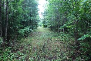 76 Acres Union Road Somerville Alabama in Morgan, AL (7 of 12)