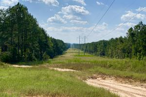 Patsaliga River Hunting & Timber Investment  in Covington, AL (13 of 20)