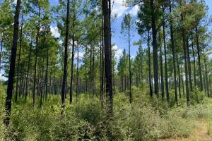 Patsaliga River Hunting & Timber Investment  in Covington, AL (2 of 20)