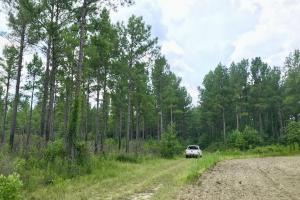 Patsaliga River Hunting & Timber Investment  in Covington, AL (16 of 20)