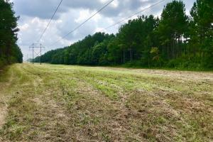 Patsaliga River Hunting & Timber Investment  in Covington, AL (11 of 20)
