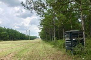 Patsaliga River Hunting & Timber Investment  in Covington, AL (3 of 20)