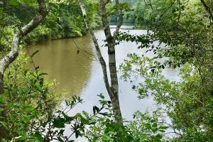 Patsaliga River Hunting & Timber Investment  in Covington, AL (1 of 20)