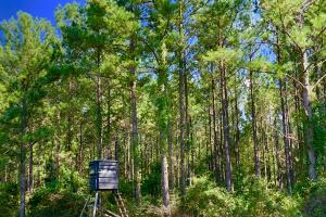 Patsaliga River Hunting & Timber Investment  in Covington, AL (9 of 20)