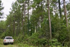 Patsaliga River Hunting & Timber Investment  in Covington, AL (19 of 20)