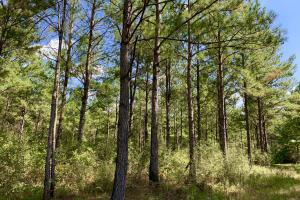 Patsaliga River Hunting & Timber Investment  in Covington, AL (14 of 20)