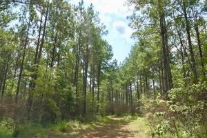 Patsaliga River Hunting & Timber Investment  in Covington, AL (12 of 20)