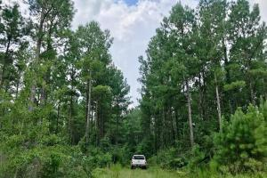 Patsaliga River Hunting & Timber Investment  in Covington, AL (15 of 20)