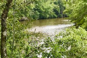 Patsaliga River Hunting & Timber Investment  in Covington, AL (4 of 20)