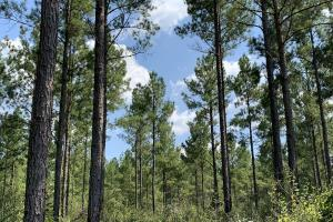 Patsaliga River Hunting & Timber Investment  in Covington, AL (17 of 20)