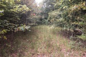 Beech River Duck Hunting and Homesite in Decatur, TN (8 of 21)