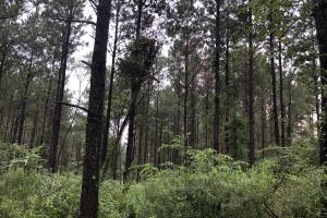 Abundant Wildlife and Prime Location - Scott County MS