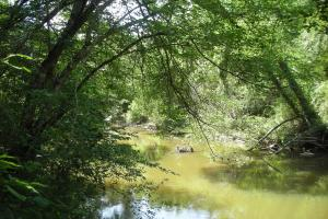 86 AC Along Tallapoose River in Haralson, GA (4 of 23)