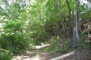 86 AC Along Tallapoose River in Haralson, GA (18 of 23)