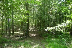 86 AC Along Tallapoose River in Haralson, GA (3 of 23)