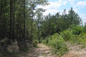 86 AC Along Tallapoose River in Haralson, GA (2 of 23)