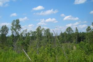 86 AC Along Tallapoose River in Haralson, GA (12 of 23)