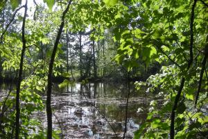 86 AC Along Tallapoose River in Haralson, GA (23 of 23)