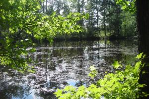 86 AC Along Tallapoose River in Haralson, GA (7 of 23)