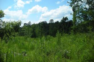 86 AC Along Tallapoose River in Haralson, GA (14 of 23)
