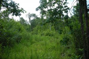 86 AC Along Tallapoose River in Haralson, GA (16 of 23)