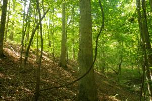 166 acres Adjoining Marrowbone State Forest WMA - Metcalfe County KY
