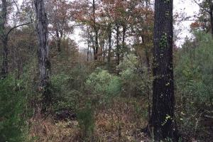 St Clair CR-33 Homesite & Timber Tract in Saint Clair, AL (2 of 7)