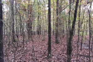 St Clair CR-33 Homesite & Timber Tract in Saint Clair, AL (5 of 7)