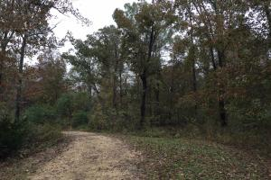 St Clair CR-33 Homesite & Timber Tract in Saint Clair, AL (3 of 7)