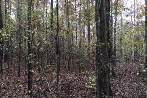 St Clair CR-33 Homesite & Timber Tract in Saint Clair, AL (6 of 7)