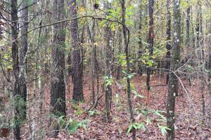 St Clair CR-33 Homesite & Timber Tract in Saint Clair, AL (7 of 7)