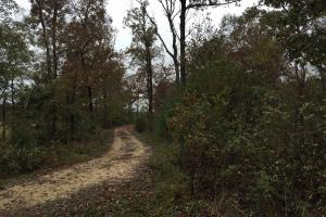 St Clair CR-33 Homesite & Timber Tract