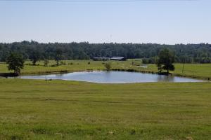 Sprawling 346 acre Ranch and Homesite in Tyler, TX (39 of 50)