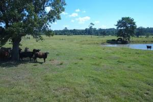 Sprawling 346 acre Ranch and Homesite in Tyler, TX (32 of 50)