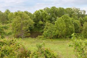Sprawling 346 acre Ranch and Homesite in Tyler, TX (41 of 50)