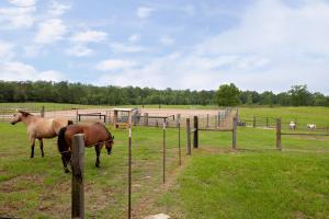 Sprawling 346 acre Ranch and Homesite in Tyler, TX (37 of 50)