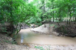 Sprawling 346 acre Ranch and Homesite in Tyler, TX (42 of 50)