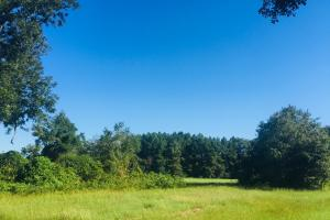 Sandy Grove Church Road 88.5 Acre Farm Tract in Lee, SC (15 of 15)