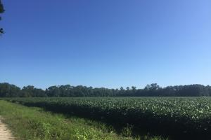 Sandy Grove Church Road 88.5 Acre Farm Tract in Lee, SC (12 of 15)
